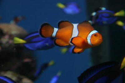 Aquarium Pacific 2